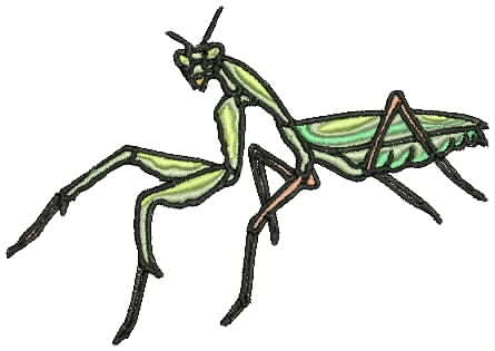 Insect7a Jpg